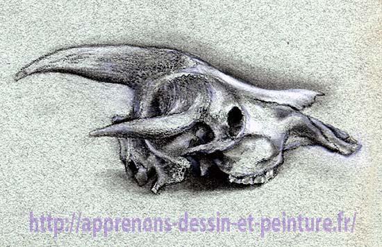 Crâne de buffle dessiné par Richard Martens dans le petit amphithéâtre du Jardin des plantes. Pierre noire et craie blanche sur papier teinté.